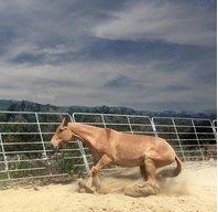 Mulelady